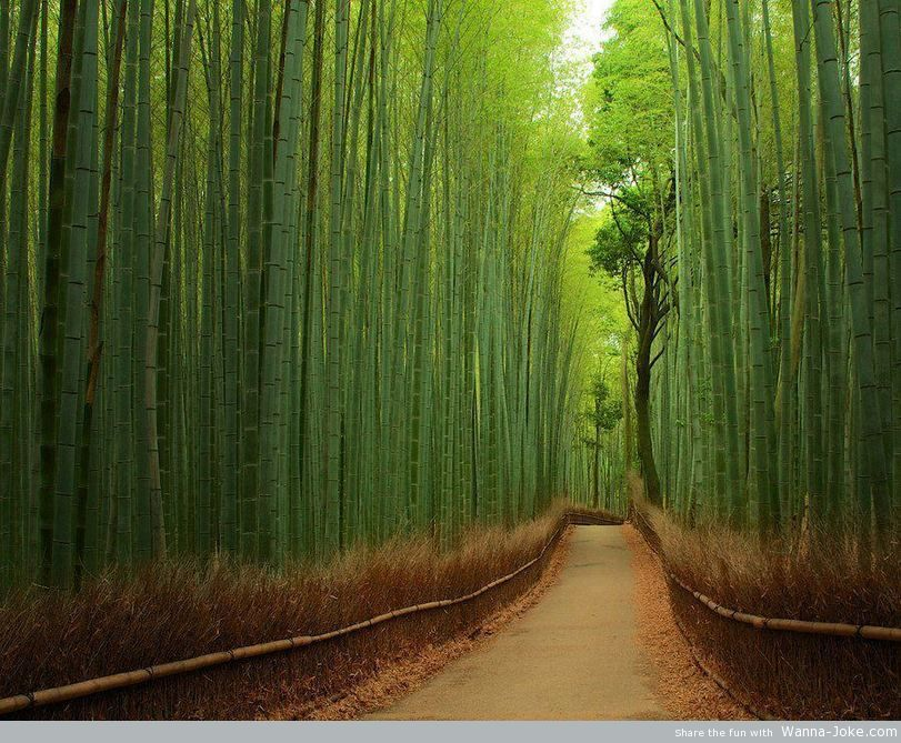 bamboo-forrest-japan