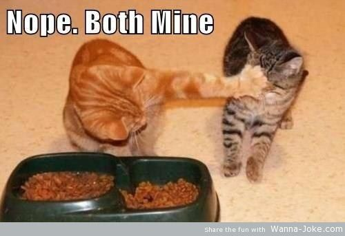both-mine-cats