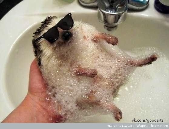 stylish-hedgehog
