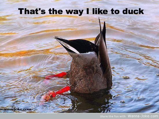 Like to duck!