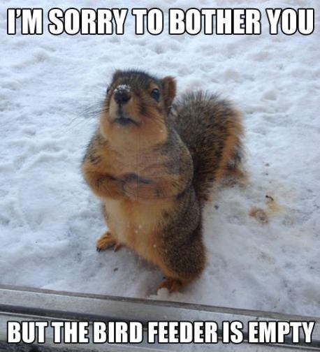 Poor hungry squirrel