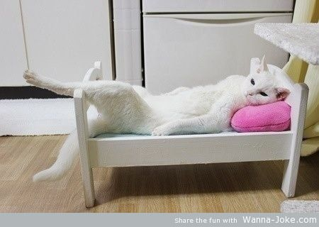 relax-kitty