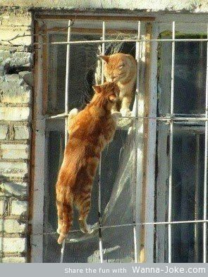 cats-in-love