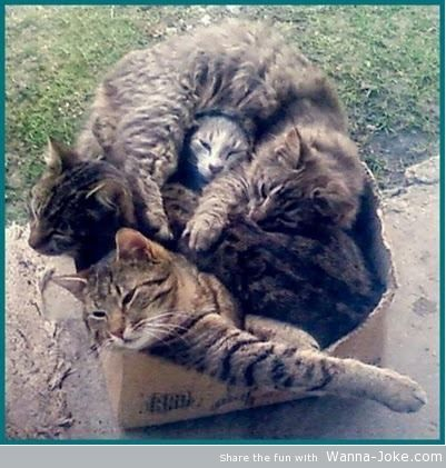 cats-in-the-box