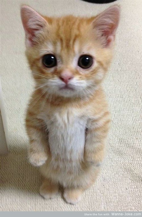 cute-kitty