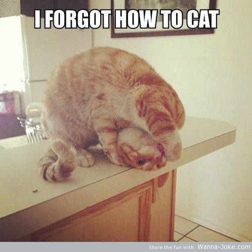 forgot-how-to-cat