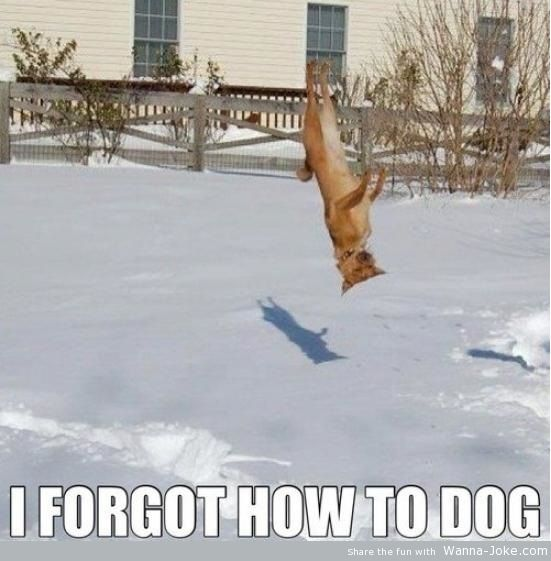forgot-how-to-dog