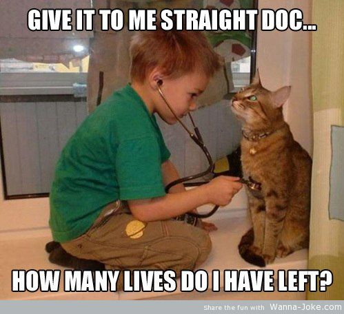 little doctor and cat