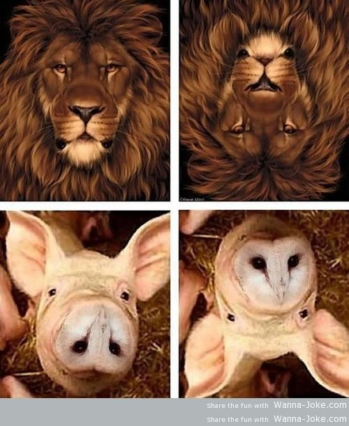 Confusing animals picture