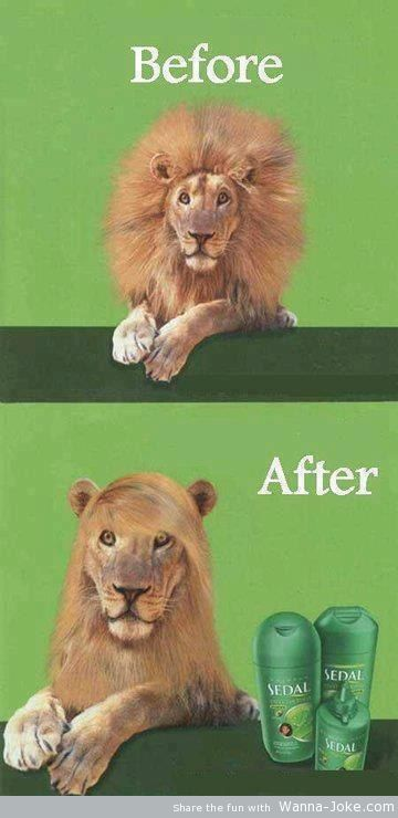 morning-jokes-before-after