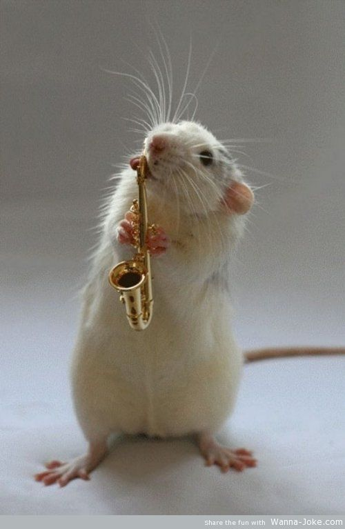 mouse-musician