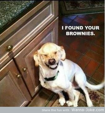 dog-found-my-brownies