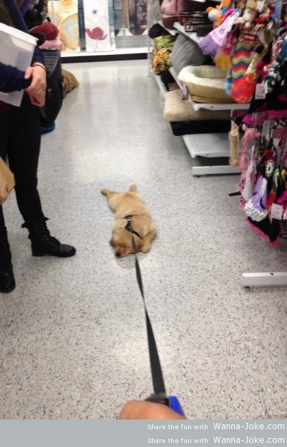 Shopping with a dog