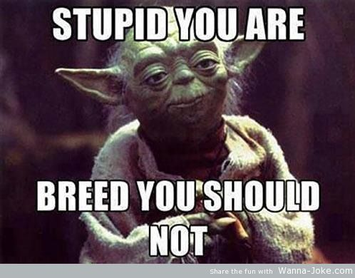 stupid-you-are