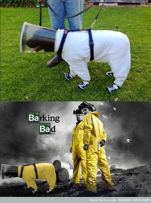 breaking-bad-dog