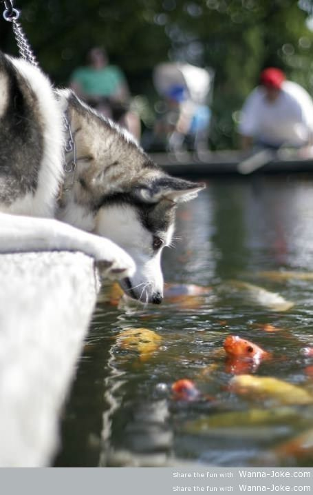 fish-and-dog