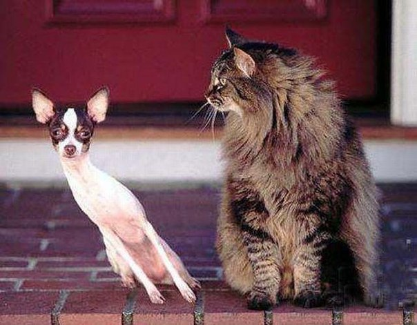 funny-animals-cat-and-dog