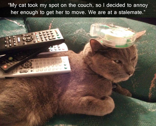 funny-cat-couch-move