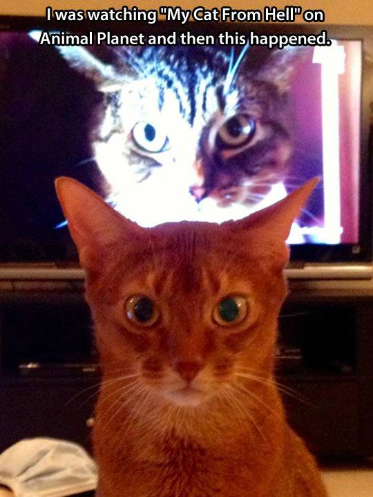 funny-cat-from-hell