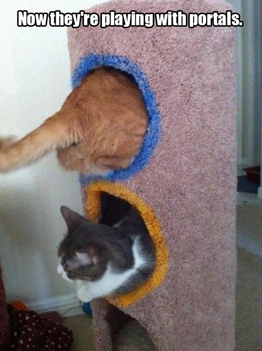 funny-cat-portal-playing-together