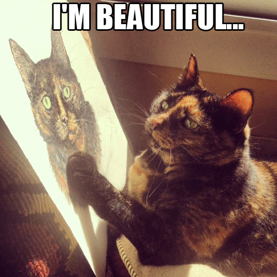 funny cat watching painting beautiful wanna joke.com