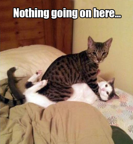 funny-cats-fighting-nothing-going-on