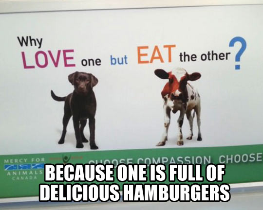 funny-dog-cow-love-and-eat