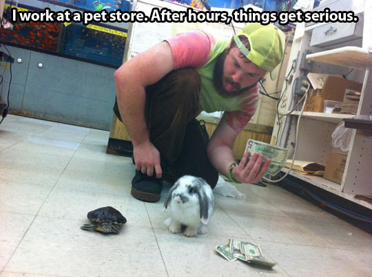 funny-pet-shop-rabbit-turtle-race-money