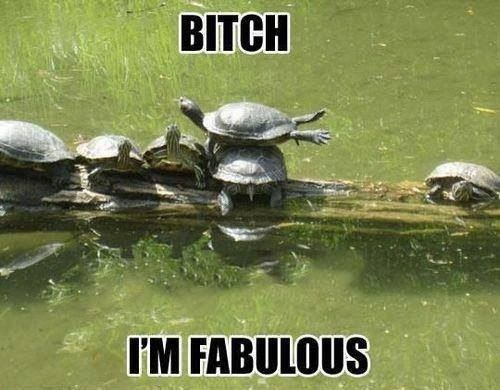 funny-picture-bitch-im-faboluos
