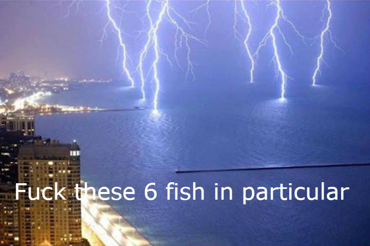 funny-picture-lightning-fish