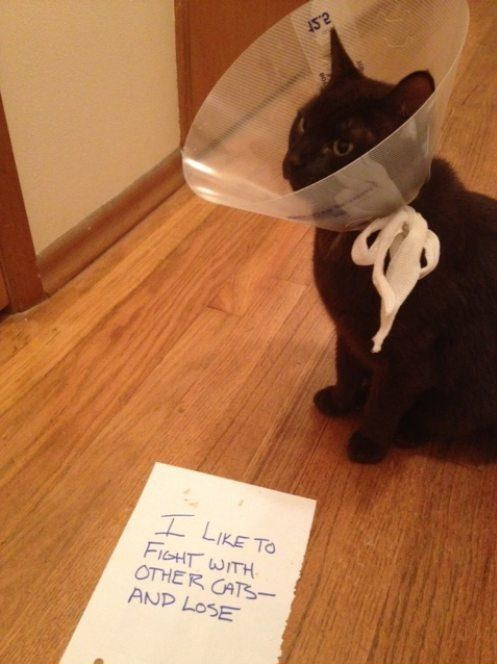funny-pictures-cat-fight-and-lose