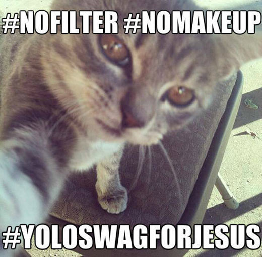funny-pictures-cats-animals-selfie