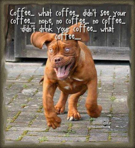 funny-pictures-dog-coffee