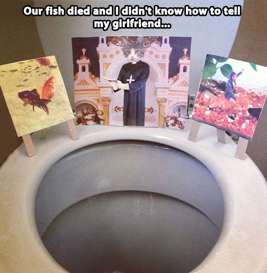 funny-pictures-fish-funeral-rip