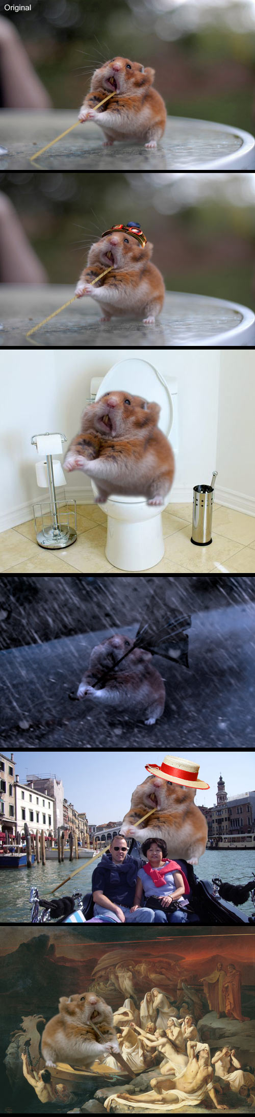 funny-pictures-hamster-photoshop-my-picture