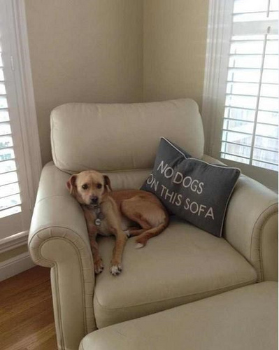 funny-pictures-no-dogs