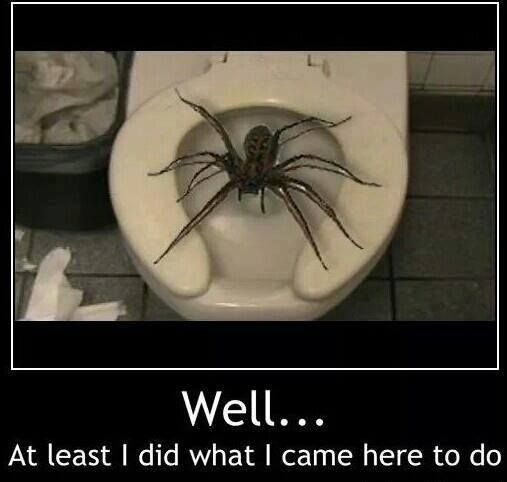funny-pictures-spider-toilet