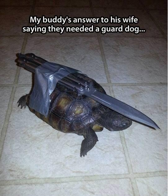 funny-pictures-turtle-guard-dog