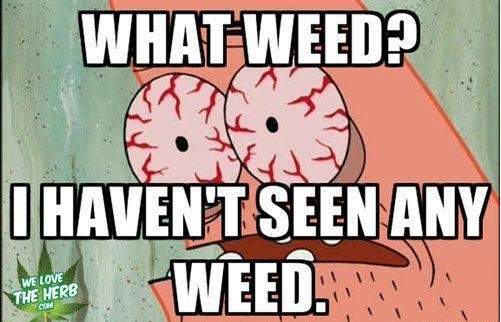 funny-pictures-what-weed