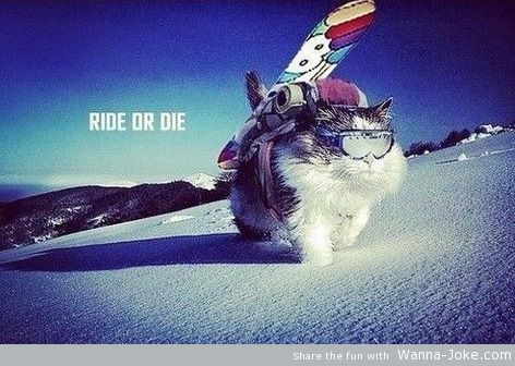 ride-or-die-cat