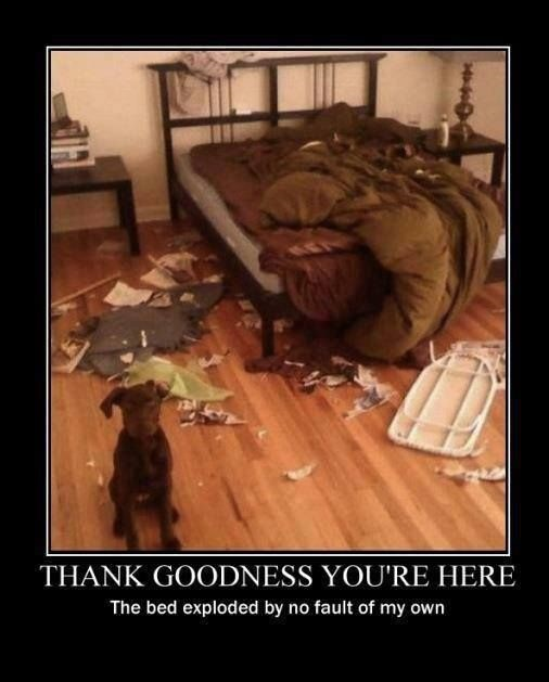 funny-picture-dog-bed-exploded