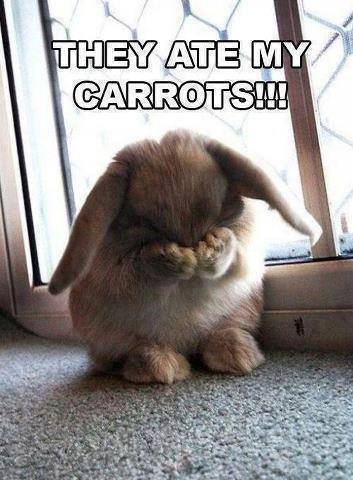 funny-picture-rabbit-cute