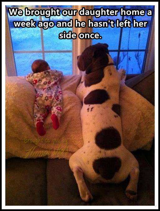 funny-pictures-baby-and-dog