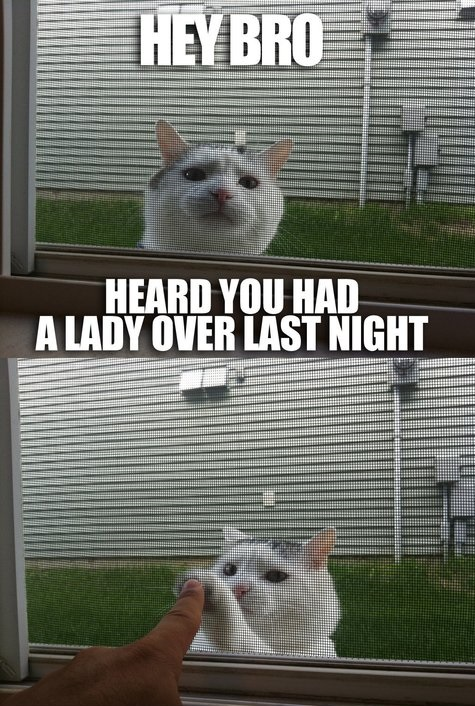 funny-pictures-cat-bro-lady-last-night