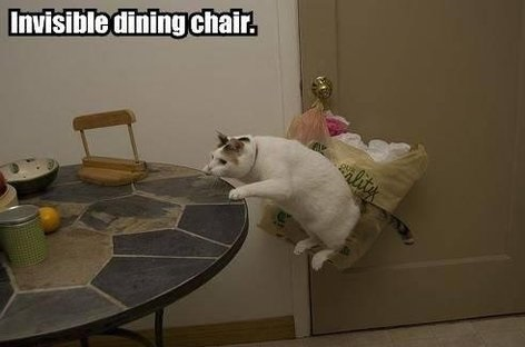 funny-pictures-cat-invisible-dining-chair
