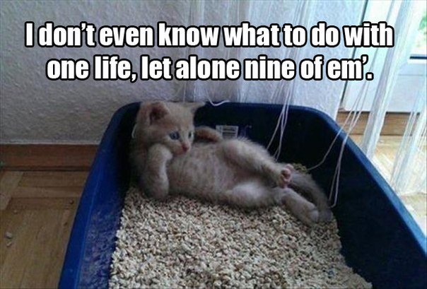 funny-pictures-cat-nine-lifes