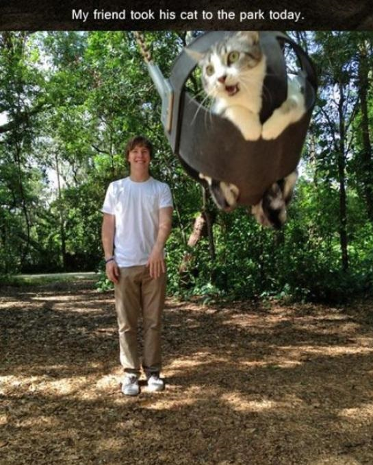 funny-pictures-cat-park-swing