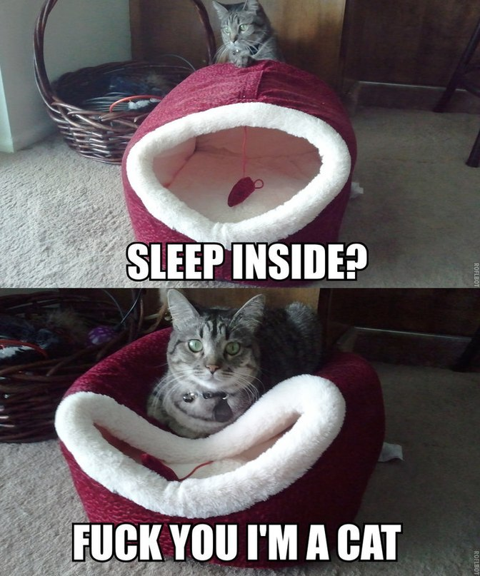 funny-pictures-cats-bad-sleeping