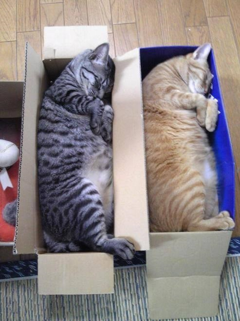 funny-pictures-cats-in-boxes