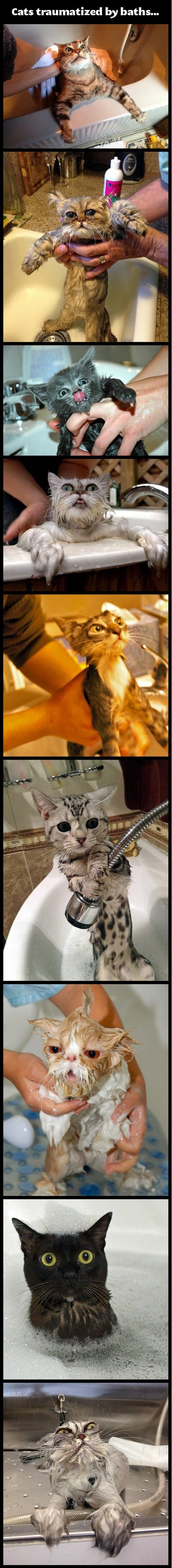 funny-pictures-cats-taking-bath